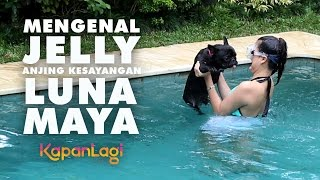 Download Video Luna Maya Berenang dan Mandikan Anjing Kesayangan, Jelly MP3 3GP MP4