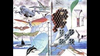 Строение злаковых. Бионика. Причины прочности стебля // Биология в Живой Природе