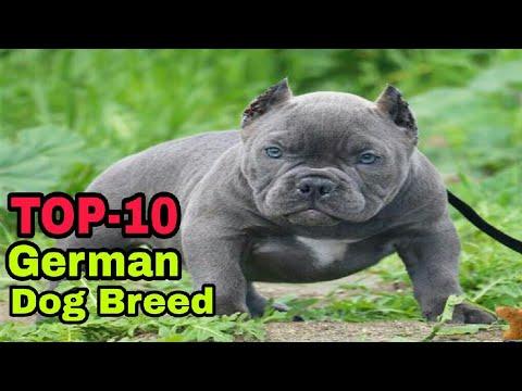 TOP - 10  German Dog Breed / German dog breeds / Aryan Dog Club   Aryandogclub