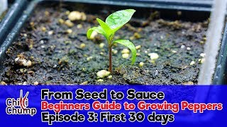 Episode 3:  First 30 days, Seedlings and Potting On (Beginners Guide to Growing Peppers)