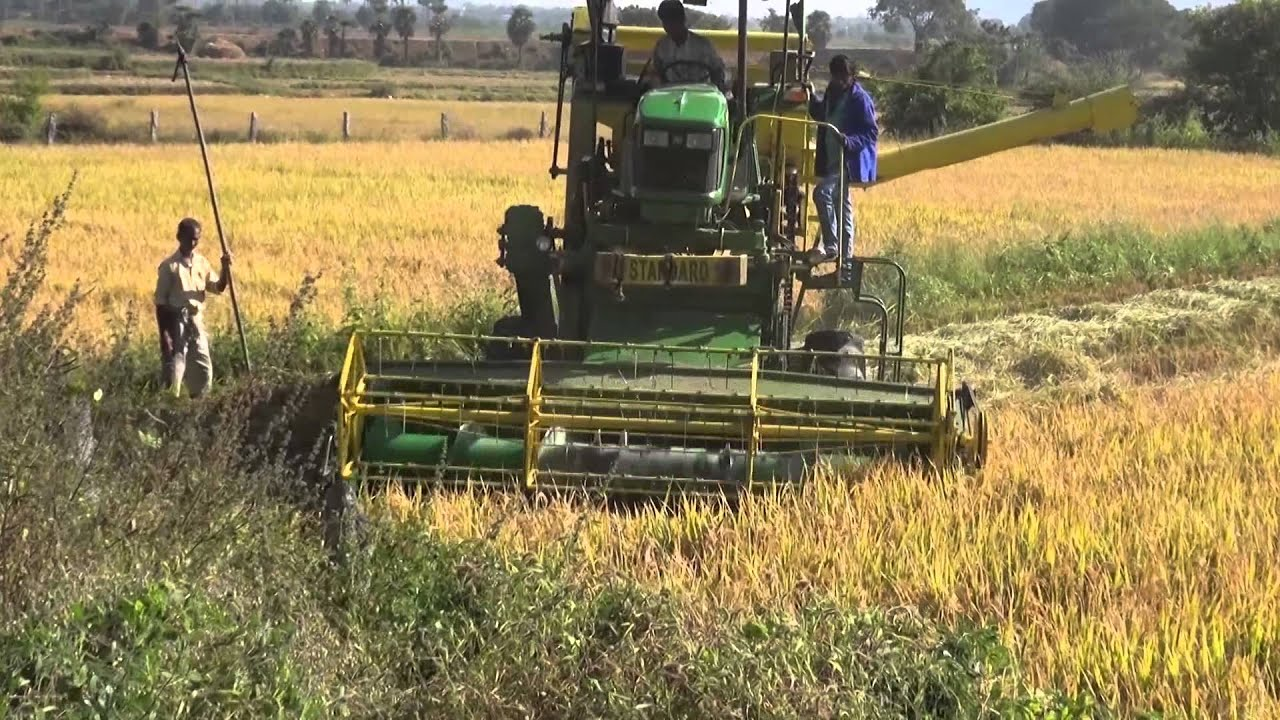 Paddy Rice Cutting Machine Crop Harvesting Youtube