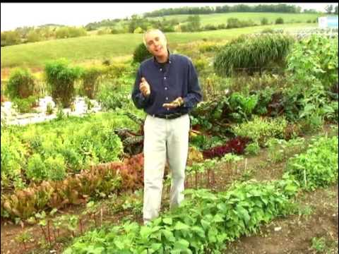 Virginia Farm Bureau - In the Garden - Vegetable Garden Tips