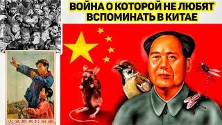 Как Китай воевал с воробьями. Как природа отомстила китайцам.