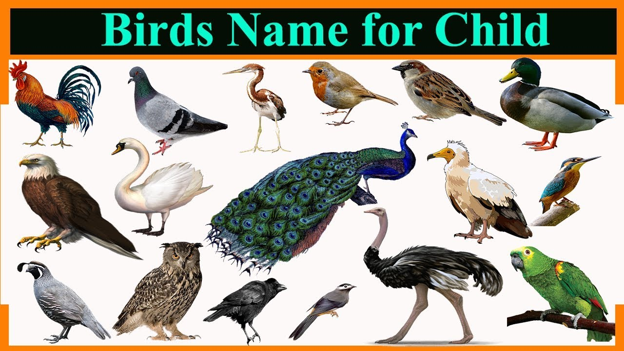 Birds Name For Child Youtube