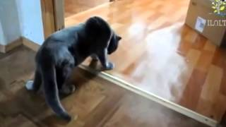 Лучшие приколы! Смешной пьяный кот.