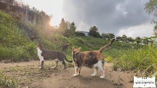 (EngSub)고양이들 마저 갬성을 자극한다