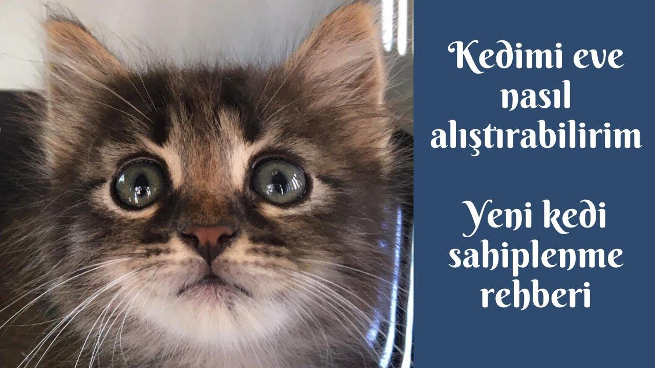 Kedimi eve ve kendime nasıl alıştırabilirim, ilk gün neler yapmalıyım? Yeni kedi sahiplenme rehberi!