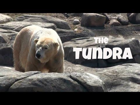 Tundra biome facts