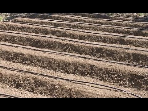 Bahçe ekim hazırlık nasıl yapılır?Domates biber vs bahçesi...
