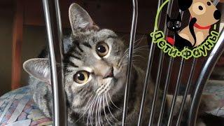 Кошка после стерилизации, чем кормить, когда снимать швы и другие моменты