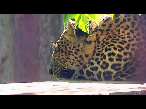 В Пермском зоопарке рассказали, как животные переносят аномальную жару