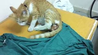 Our Cat Giving Birth at My Workplace