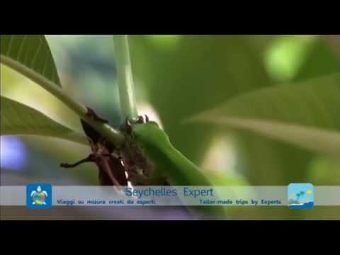 Seychelles Wildlife - Seychelles Expert