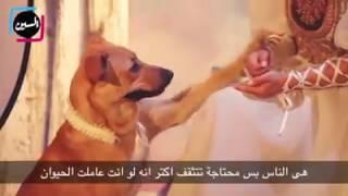 أمينة خليل تتضامن مع كلاب وقطط الشوارع
