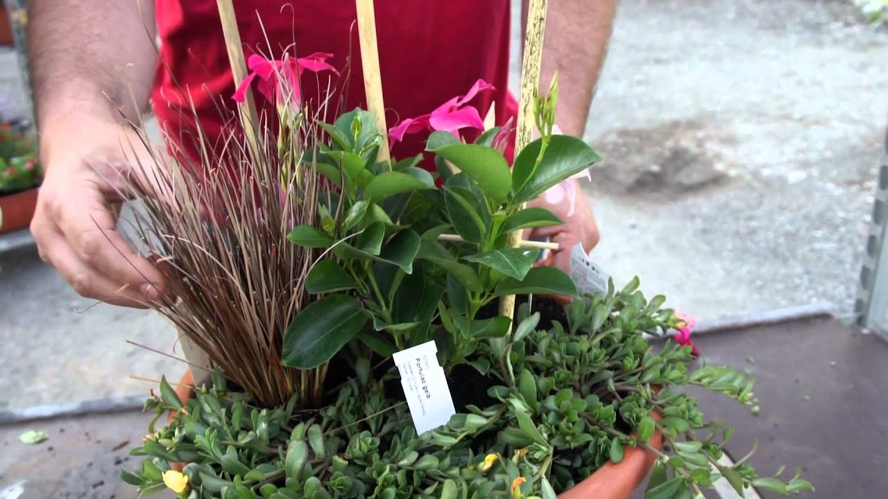 Pflegeleichte Kubelbepflanzung Dipladenia Portulak Carex Youtube