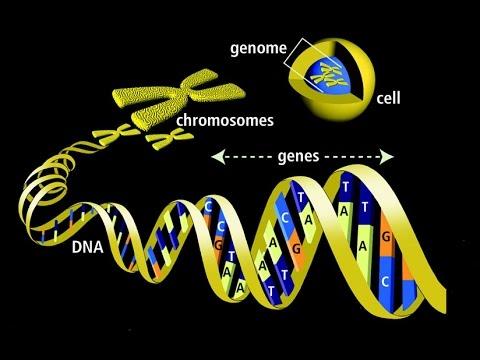 """Résultat de recherche d'images pour """"code génétique """""""