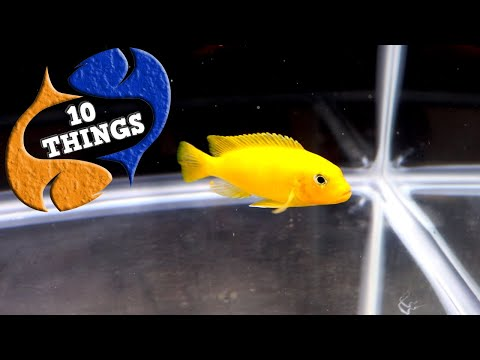 10 Tips To Make Your Aquarium Look Cleaner (10 THINGS)