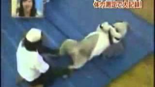 El mono y el perro-Los animales también hacen abdominales