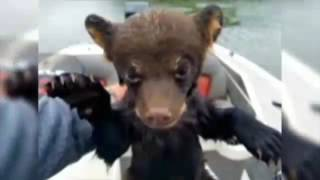 Fisherman saves bear cub from lake