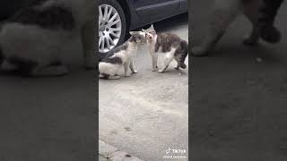 Funny Angry Cat Video On Tiktok
