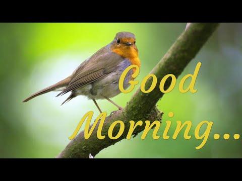 Good Morning Whatsapp Status || New Whatsapp Status || Trending Status 2019 || Warm Good Morning