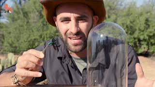 TOP 5 Worst Reactions By Coyote Peterson