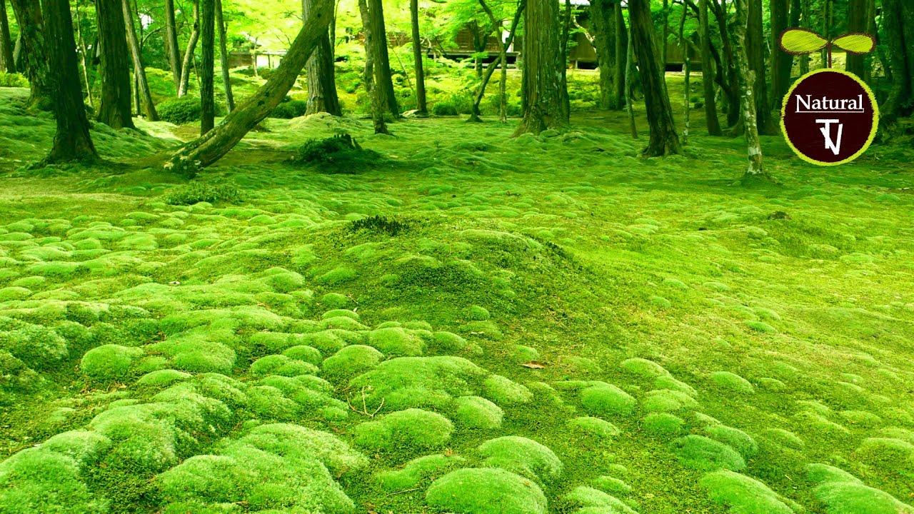 「The Most Beautiful Green Gardens」Relaxing Instrumental