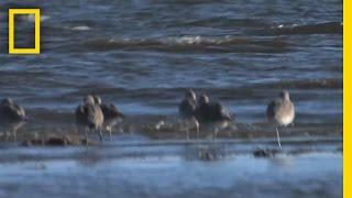 """Citizen """"Scientists"""" Track Birds in Oil Zone"""