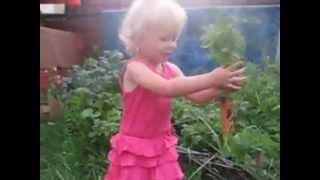 Морковь довела ребенка до мата(Cуровая морковная реальность., 2012-03-15T17:08:46.000Z)