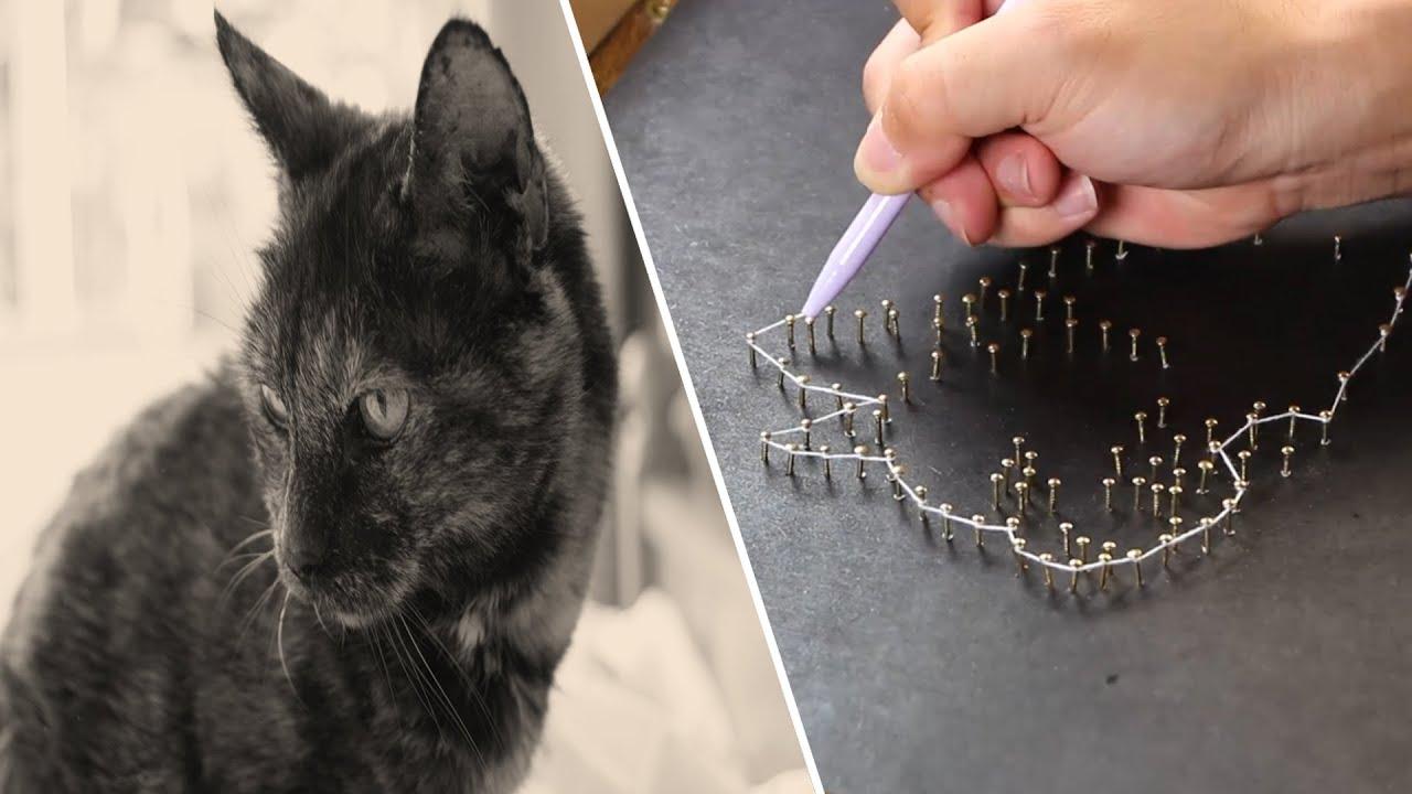 고양이 집사되는 방법