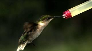 Time Warp: Hummingbird