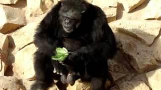 zooحديقة الحيوانات في الرياض
