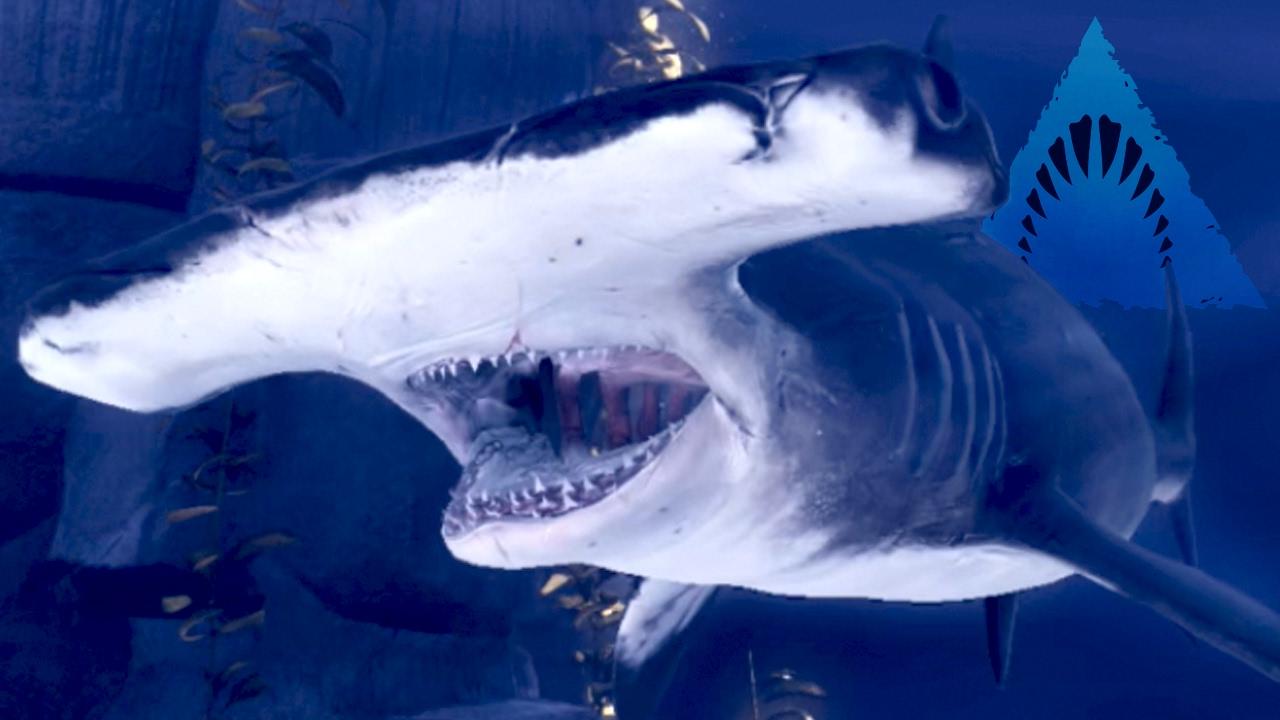 HAMMERHEAD SHARK! - Bumps Into Walls! - Depth | Ep7 HD ...