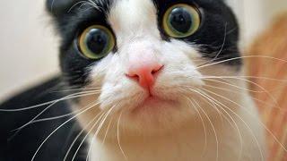 Смешные кошки 2015. Самое смешное видео про кошек!