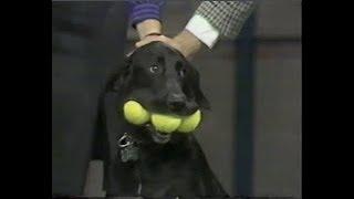 Stupid Pet Tricks on Late Night, September 24, 1985