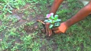 Sharpex Quick Planter