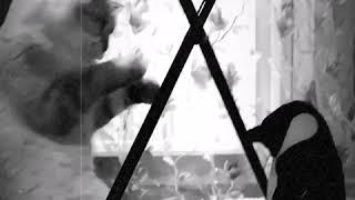 Фильм Боец на канале Симба ТВ