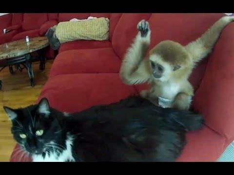 Самые наглые обезьяны смотреть видео прикол - 2:31