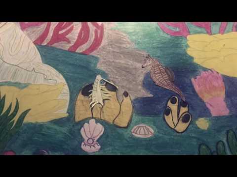 Marine Ecosystem Nature Video