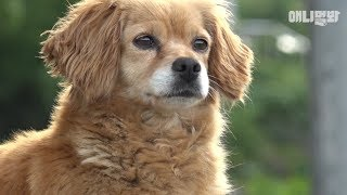 주인 할머니 목숨을 구했지만 뚱이는 지금 혼자입니다  l  Dog Saved The Owner's Life, But Why Is She Left Alone..?
