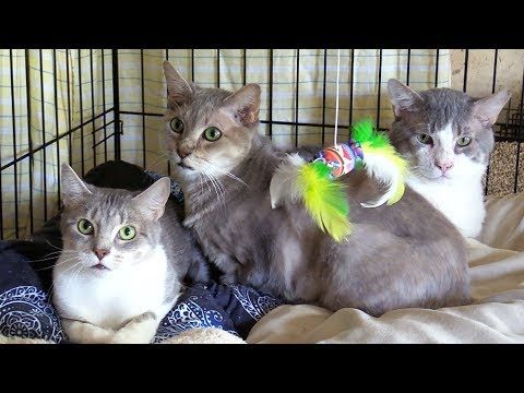UPDATE: Cats Rescued from Hoarder!