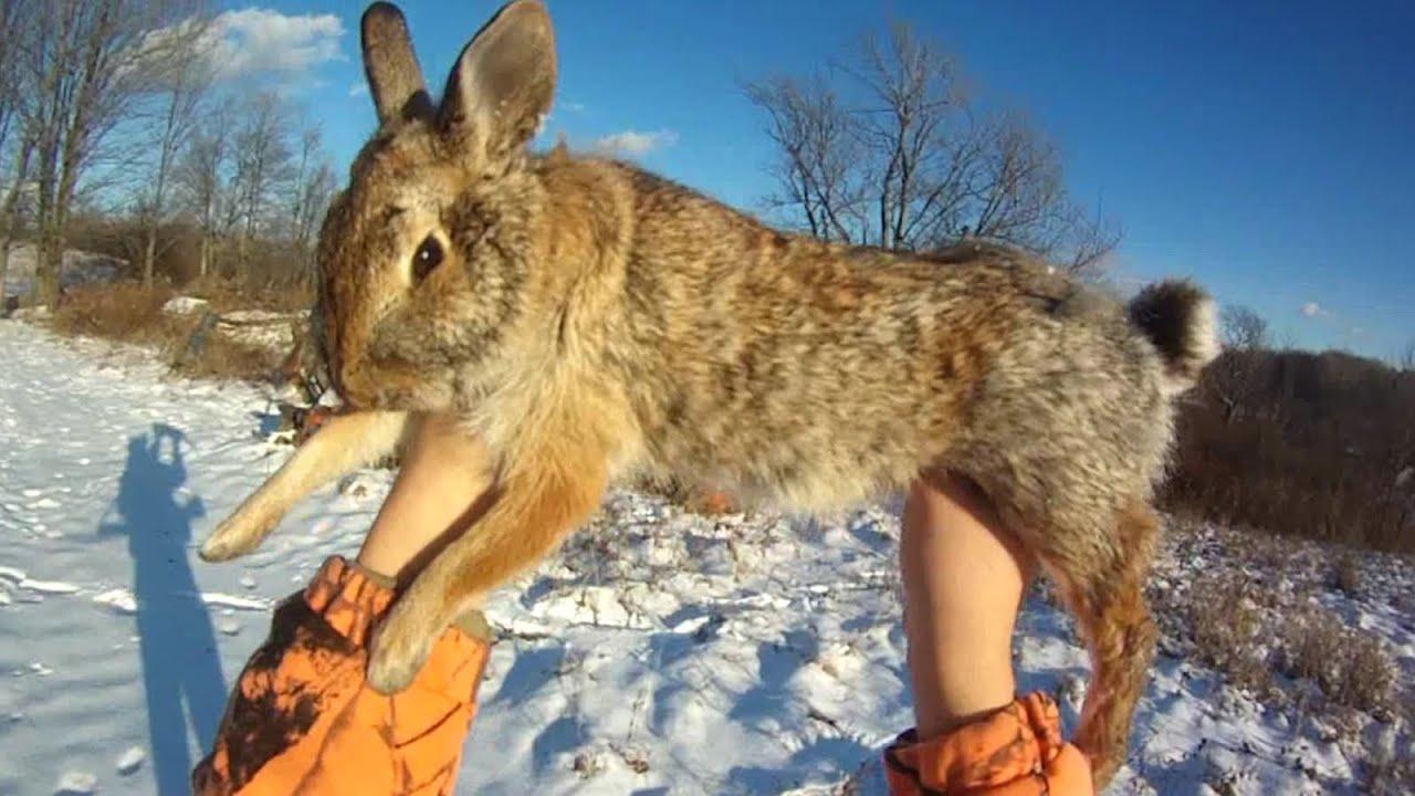 Small Game Hunting  12  1 Cottontail Rabbit By 20 Ga  Shotgun