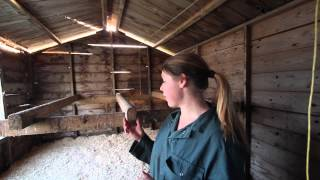 Spring Clean for the Chickens with Octavia Hopwood (Episode 6: On the Farm)