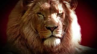 Lion Whatsapp Status Video Download Mp4 Hd Video Wapwon