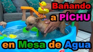 BATHING MY CHIHUAHUA DOG PÍCHU IN THE WATER TABLE // YESLY