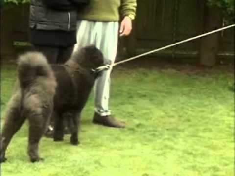 Dog Training - Control a Dominant Dog