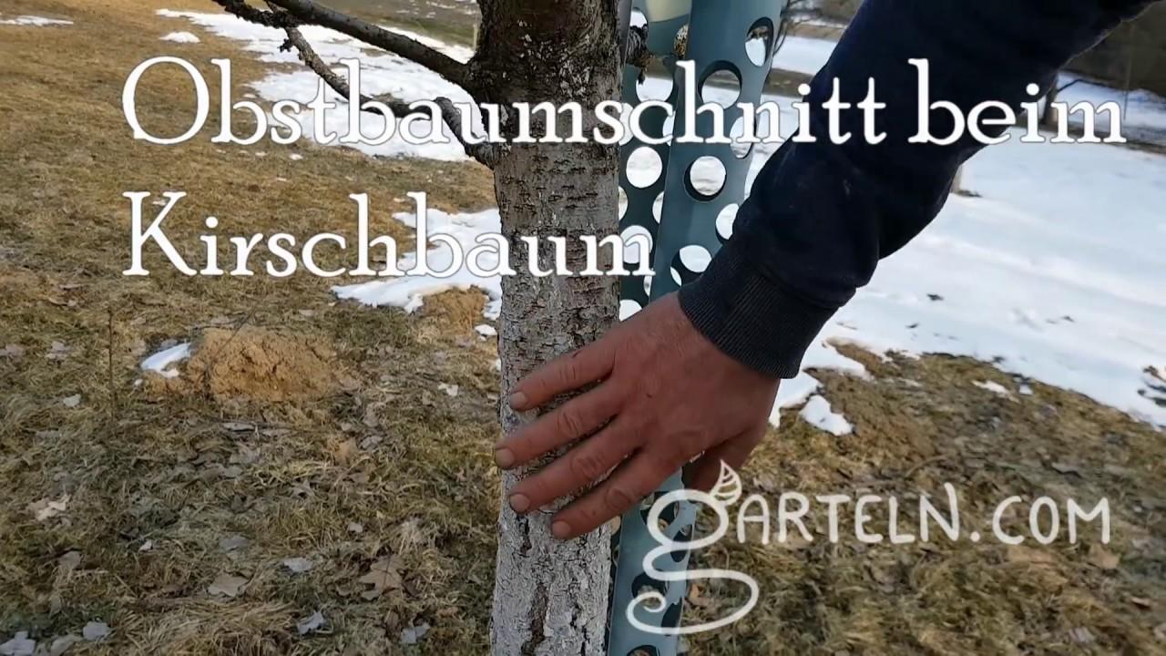Bevorzugt Obstbaumschnitt - Kirsche bzw. Steinobst mit Dominik Schreiber QZ72