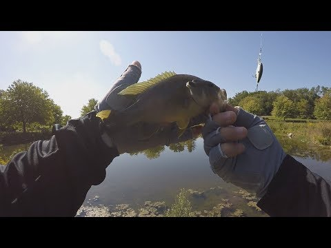 The Hunt For Green Sunfish At Dwight Lydell Park - Float Fishing Ponds