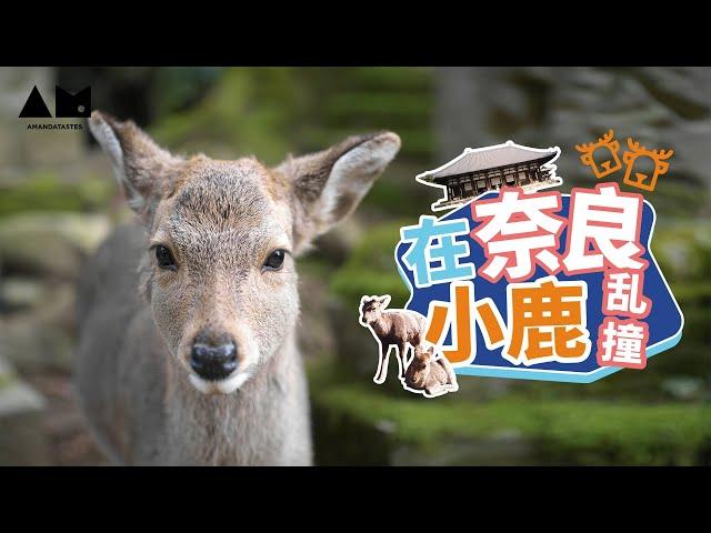 在奈良,我体会到了小鹿乱撞的感觉~Vlog in Tokyo Japan