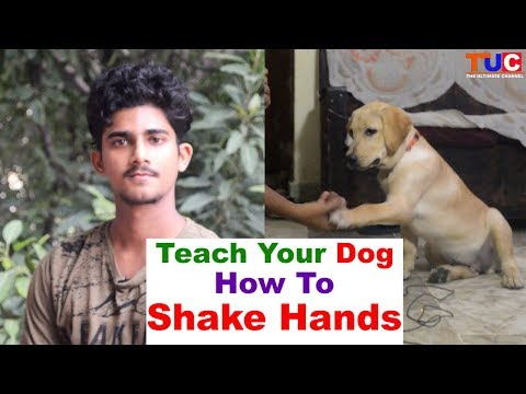 Teach Your DOG How to 'SHAKE HANDS' : Dog Training : TUC